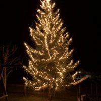 Tannenbaum erleuchtet