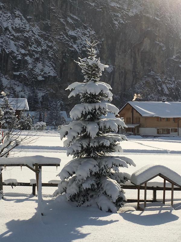 frisch verschneiter Garten